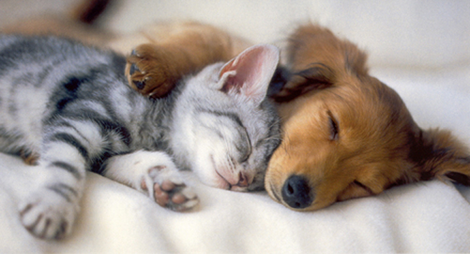 kitten-puppy-love